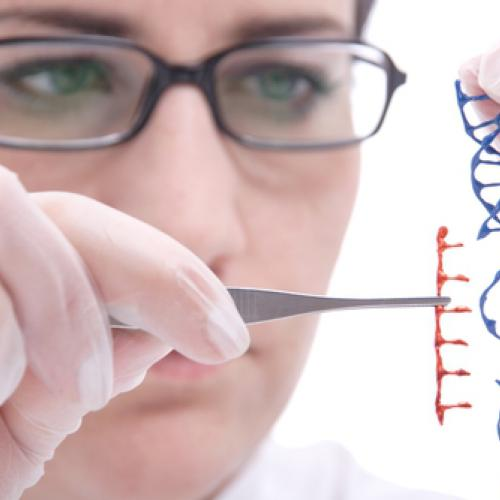 the dangers of genetic engineering The dangers of genetic engineering can revolve around eliminating genetic diversity by creating only the best possible scenario for creatures, food and medicine.
